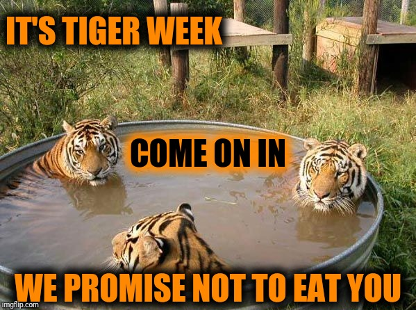⚆ _ ⚆ Never trust a tiger, unless it's TigerLegend1046! Tiger Week Jul 29 - Aug 5, A TigerLegend1046 event | IT'S TIGER WEEK WE PROMISE NOT TO EAT YOU COME ON IN | image tagged in tiger week,tiger week 2018,tigerlegend1046,never trust a tiger,kitty hongry,eye of the tiger | made w/ Imgflip meme maker