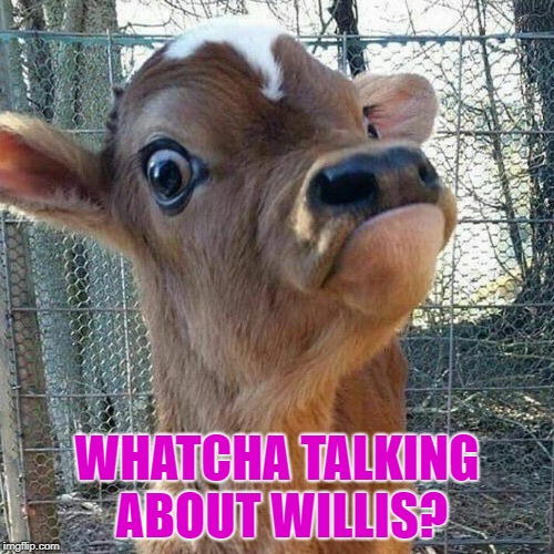 whatcha talking about willis? | WHATCHA TALKING ABOUT WILLIS? | image tagged in gary coleman | made w/ Imgflip meme maker