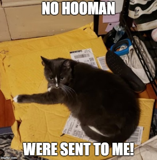 NO HOOMAN! | NO HOOMAN WERE SENT TO ME! | image tagged in funny memes,funny cat memes,cat memes,cats,mine | made w/ Imgflip meme maker