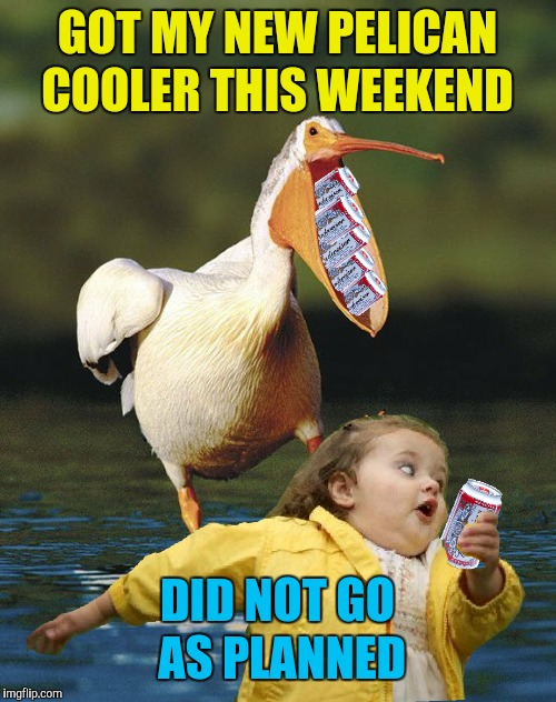 All I wanted was one cold beer | GOT MY NEW PELICAN COOLER THIS WEEKEND DID NOT GO AS PLANNED | image tagged in memes,pelican,little girl running away,hold my beer,funny | made w/ Imgflip meme maker