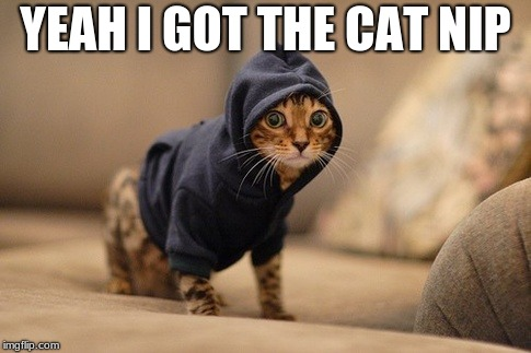 Hoody Cat Meme | YEAH I GOT THE CAT NIP | image tagged in memes,hoody cat | made w/ Imgflip meme maker
