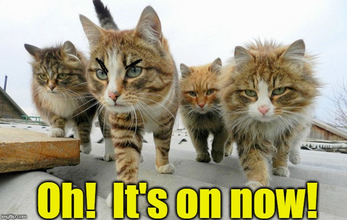 Cat gang | Oh!  It's on now! | image tagged in cat gang | made w/ Imgflip meme maker