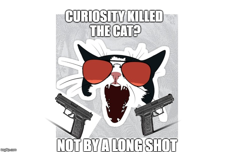 catgun | CURIOSITY KILLED THE CAT? NOT BY A LONG SHOT | image tagged in memes,cats | made w/ Imgflip meme maker