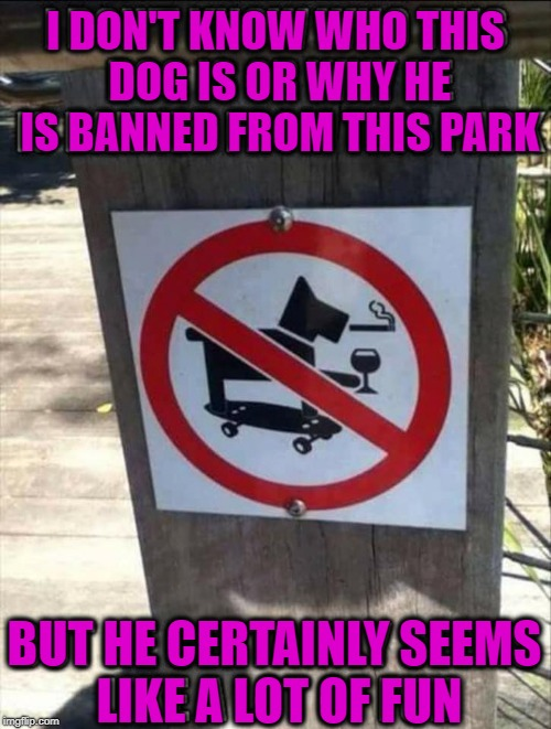 That dog is a legend | I DON'T KNOW WHO THIS DOG IS OR WHY HE IS BANNED FROM THIS PARK BUT HE CERTAINLY SEEMS LIKE A LOT OF FUN | image tagged in legend,dog,legendary | made w/ Imgflip meme maker