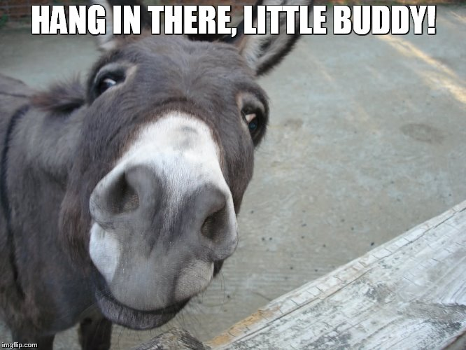 Hang in There | HANG IN THERE, LITTLE BUDDY! | image tagged in donkey | made w/ Imgflip meme maker