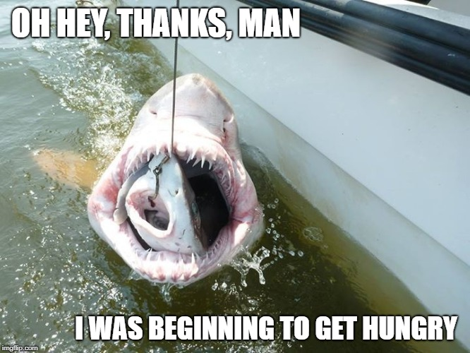 Super Fresh Fish Delivery | OH HEY, THANKS, MAN I WAS BEGINNING TO GET HUNGRY | image tagged in shark,dinner | made w/ Imgflip meme maker