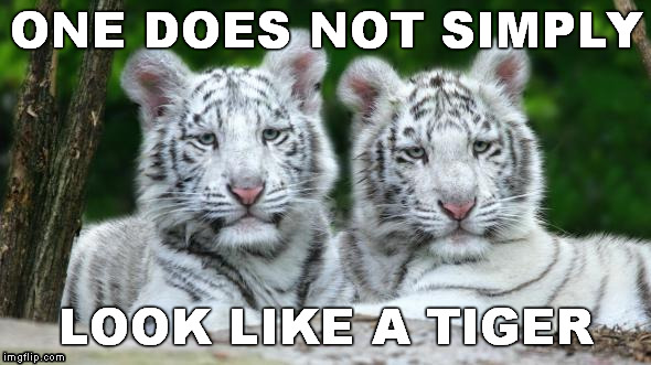 ONE DOES NOT SIMPLY LOOK LIKE A TIGER | made w/ Imgflip meme maker
