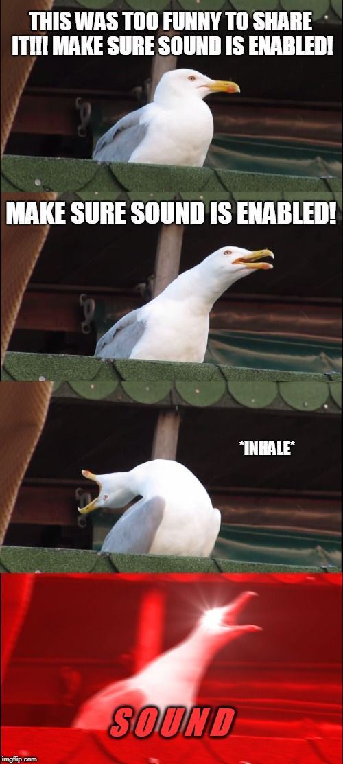 raydog have you defied time and space | THIS WAS TOO FUNNY TO SHARE IT!!! MAKE SURE SOUND IS ENABLED! MAKE SURE SOUND IS ENABLED! *INHALE* S O U N D | image tagged in memes,inhaling seagull,funny,sound,imgflip pro,raydog | made w/ Imgflip meme maker