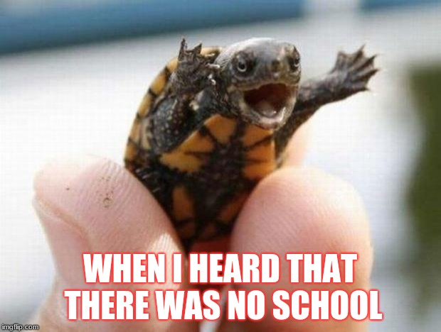 happy baby turtle | WHEN I HEARD THAT THERE WAS NO SCHOOL | image tagged in happy baby turtle | made w/ Imgflip meme maker