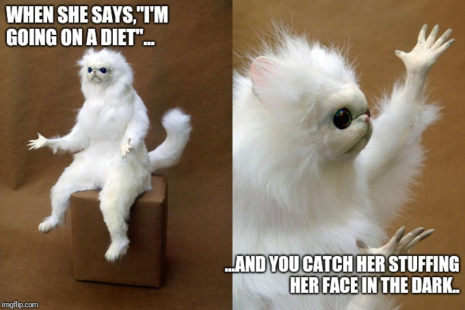 "Persian Cat Room Guardian | WHEN SHE SAYS,""I'M GOING ON A DIET""... ...AND YOU CATCH HER STUFFING HER FACE IN THE DARK.. 