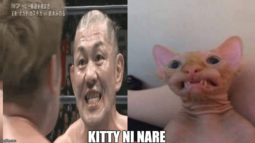 Suzuki's Cat |  KITTY NI NARE | image tagged in njpw,wrestling,mma | made w/ Imgflip meme maker