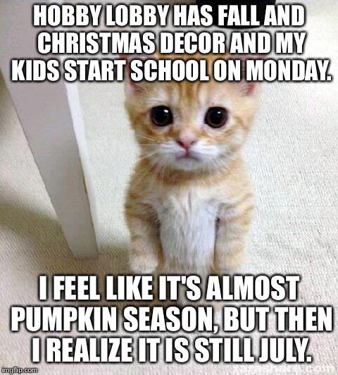 Christmas In July Cat Meme.Cute Cat Meme Imgflip