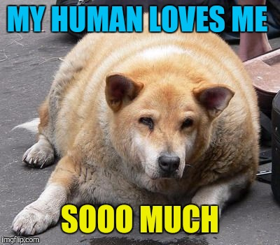 fat dog | MY HUMAN LOVES ME SOOO MUCH | image tagged in fat dog | made w/ Imgflip meme maker