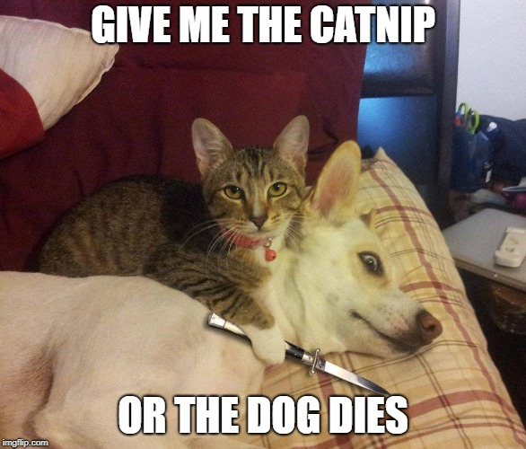 cat, dog & knife | GIVE ME THE CATNIP OR THE DOG DIES | image tagged in cat,dog  knife | made w/ Imgflip meme maker