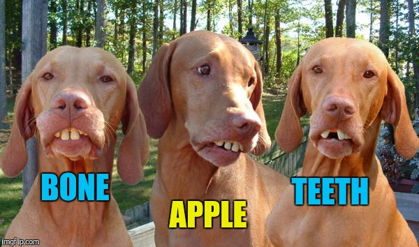 redneck dog teeth | BONE APPLE TEETH | image tagged in redneck dog teeth | made w/ Imgflip meme maker
