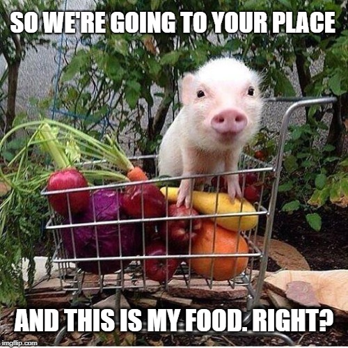 baby pig please do not eat bacon | SO WE'RE GOING TO YOUR PLACE AND THIS IS MY FOOD. RIGHT? | image tagged in baby pig please do not eat bacon | made w/ Imgflip meme maker
