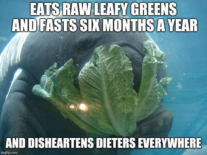 Weight Loss Manatee | EATS RAW LEAFY GREENS AND FASTS SIX MONTHS A YEAR AND DISHEARTENS DIETERS EVERYWHERE | image tagged in weight loss manatee | made w/ Imgflip meme maker