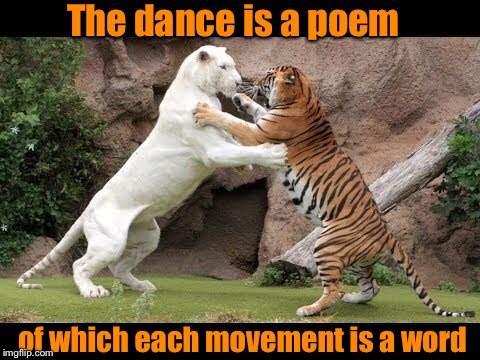 Tigers Week!  | The dance is a poem of which each movement is a word | image tagged in tiger week,tiger week 2018,dancing,inspirational,inspirational quote,poetry | made w/ Imgflip meme maker