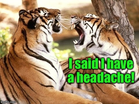 Tiger Week! | I said I have a headache! | image tagged in tiger week 2018,headache,tiger week | made w/ Imgflip meme maker