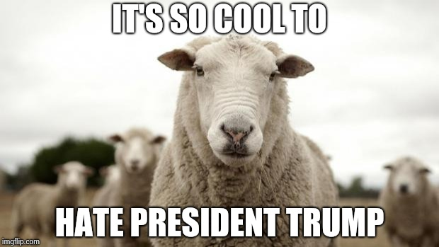 Sheep | IT'S SO COOL TO HATE PRESIDENT TRUMP | image tagged in sheep | made w/ Imgflip meme maker