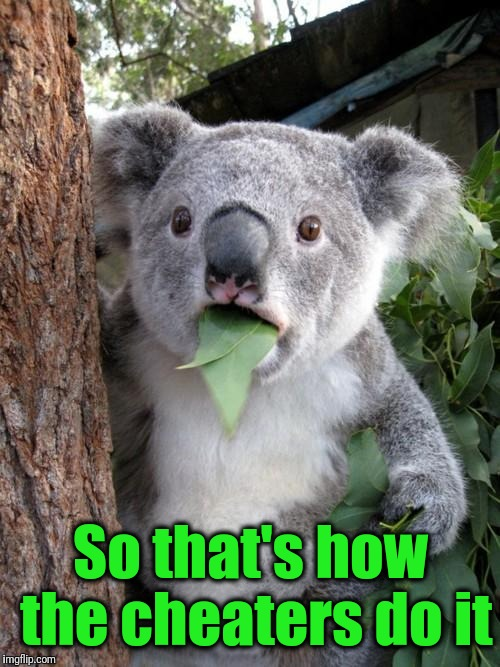 Surprised Koala Meme | So that's how the cheaters do it | image tagged in memes,surprised koala | made w/ Imgflip meme maker