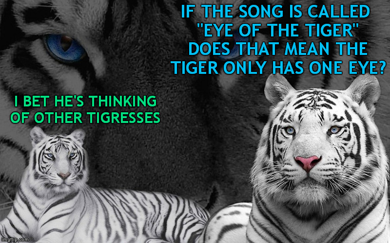 "Eye Of The Tiger (Tiger Week Jul 29 - Aug 5) | IF THE SONG IS CALLED ""EYE OF THE TIGER"" DOES THAT MEAN THE TIGER ONLY HAS ONE EYE? I BET HE'S THINKING OF OTHER TIGRESSES 
