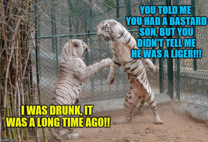 YOU TOLD ME YOU HAD A BASTARD SON, BUT YOU DIDN'T TELL ME HE WAS A LIGER!!! I WAS DRUNK, IT WAS A LONG TIME AGO!! | image tagged in white tiger,tiger week | made w/ Imgflip meme maker