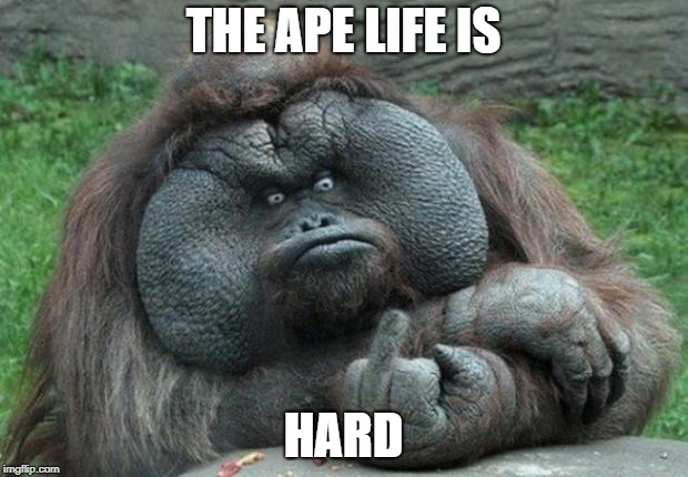 animal | THE APE LIFE IS HARD | image tagged in animal | made w/ Imgflip meme maker