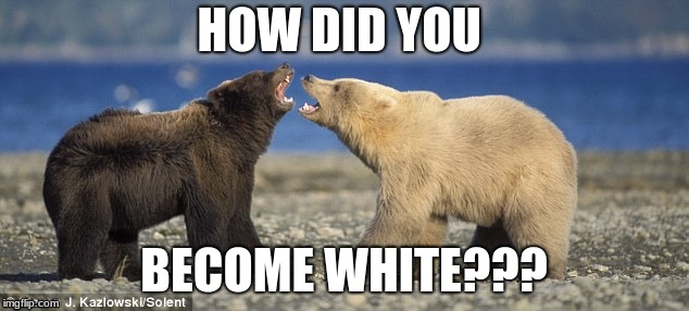 The Bears | HOW DID YOU BECOME WHITE??? | image tagged in bears | made w/ Imgflip meme maker