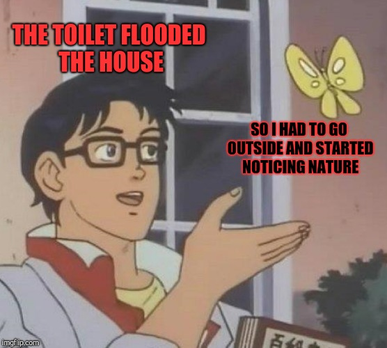 Is This A Pigeon Meme | THE TOILET FLOODED THE HOUSE SO I HAD TO GO OUTSIDE AND STARTED NOTICING NATURE | image tagged in memes,is this a pigeon | made w/ Imgflip meme maker