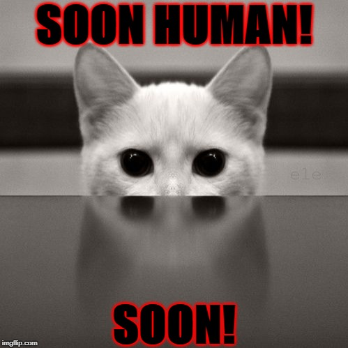 SOON HUMAN! SOON! | image tagged in demon possessed cat | made w/ Imgflip meme maker
