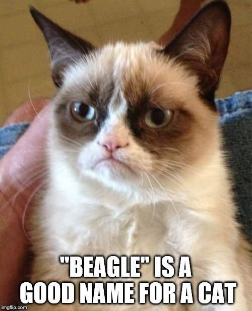 "Grumpy Cat Meme | ""BEAGLE"" IS A GOOD NAME FOR A CAT 