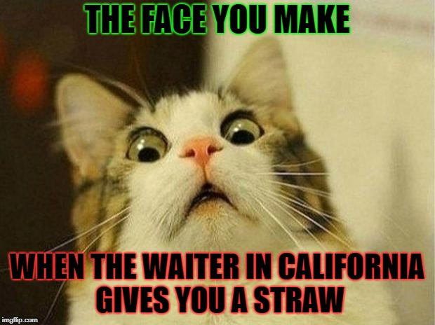 Scared Cat Meme | THE FACE YOU MAKE WHEN THE WAITER IN CALIFORNIA GIVES YOU A STRAW | image tagged in memes,scared cat | made w/ Imgflip meme maker
