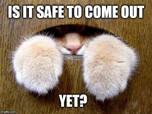 Peaking Out | IS IT SAFE TO COME OUT YET? | image tagged in memes,cat,hiding,safe,questions | made w/ Imgflip meme maker