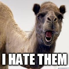 Camel | I HATE THEM | image tagged in camel | made w/ Imgflip meme maker
