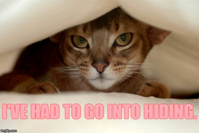I'VE HAD TO GO INTO HIDING. | made w/ Imgflip meme maker