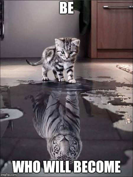 catiger | BE WHO WILL BECOME | image tagged in catiger | made w/ Imgflip meme maker