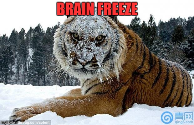 Cocaine Tiger | BRAIN FREEZE | image tagged in cocaine tiger | made w/ Imgflip meme maker