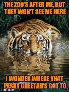 The great escape, Tiger Week 2018, July 29 - August 5, a TigerLegend1046 event | U | image tagged in memes,tiger week,tiger week 2018,tigerlegend1046,zoo,escape | made w/ Imgflip meme maker