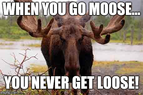 WHEN YOU GO MOOSE... YOU NEVER GET LOOSE! | made w/ Imgflip meme maker
