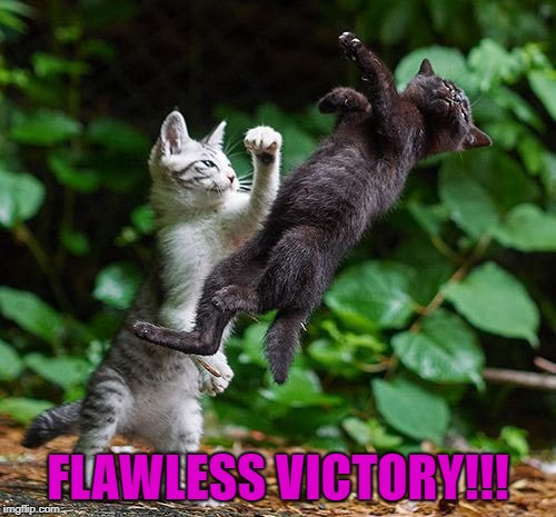 Finish Him!!! | FLAWLESS VICTORY!!! | image tagged in kitten fight,memes,mortal kombat,cats,finish him,animals | made w/ Imgflip meme maker