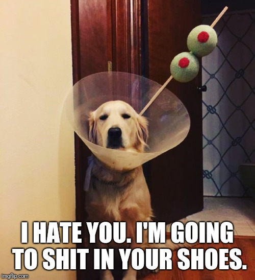 I HATE YOU. I'M GOING TO SHIT IN YOUR SHOES. | image tagged in martini dog,not amused | made w/ Imgflip meme maker