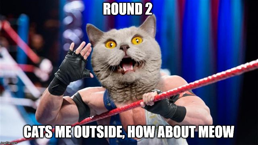 ROUND 2 CATS ME OUTSIDE, HOW ABOUT MEOW | made w/ Imgflip meme maker