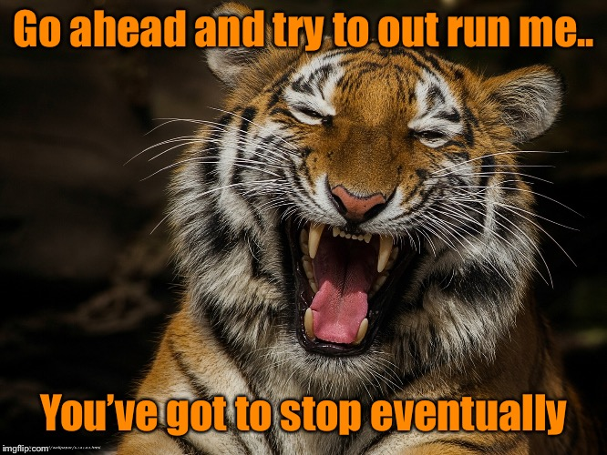 Laughing Tiger | Go ahead and try to out run me.. You've got to stop eventually | image tagged in laughing tiger | made w/ Imgflip meme maker