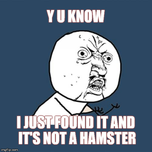 Y U No Meme | Y U KNOW I JUST FOUND IT AND IT'S NOT A HAMSTER | image tagged in memes,y u no | made w/ Imgflip meme maker