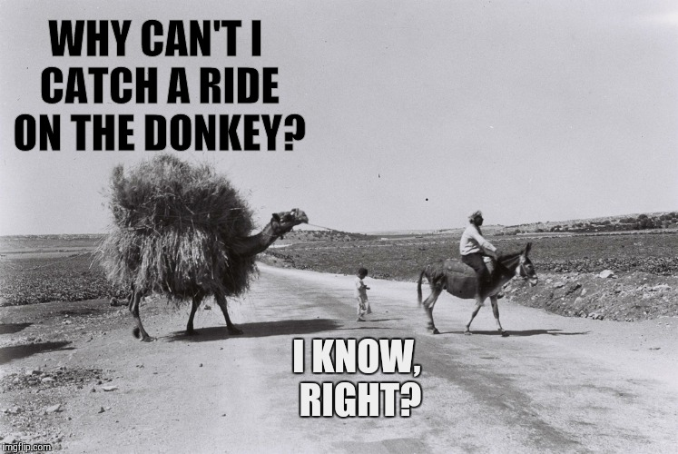 WHY CAN'T I CATCH A RIDE ON THE DONKEY? I KNOW, RIGHT? | made w/ Imgflip meme maker