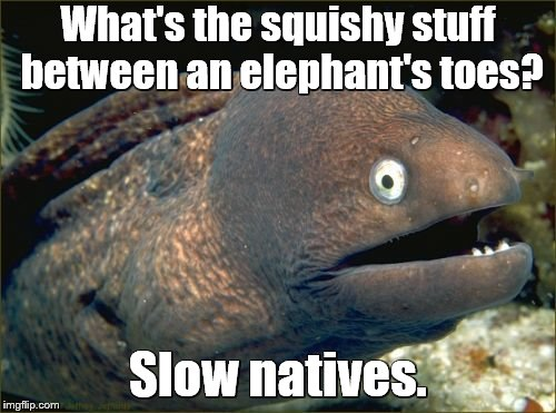 Bad Joke Eel | What's the squishy stuff between an elephant's toes? Slow natives. | image tagged in memes,bad joke eel,elephants,bad joke | made w/ Imgflip meme maker