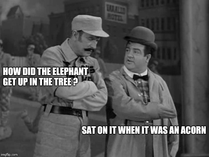 Abbott and Costello | HOW DID THE ELEPHANT GET UP IN THE TREE ? SAT ON IT WHEN IT WAS AN ACORN | image tagged in abbott and costello | made w/ Imgflip meme maker
