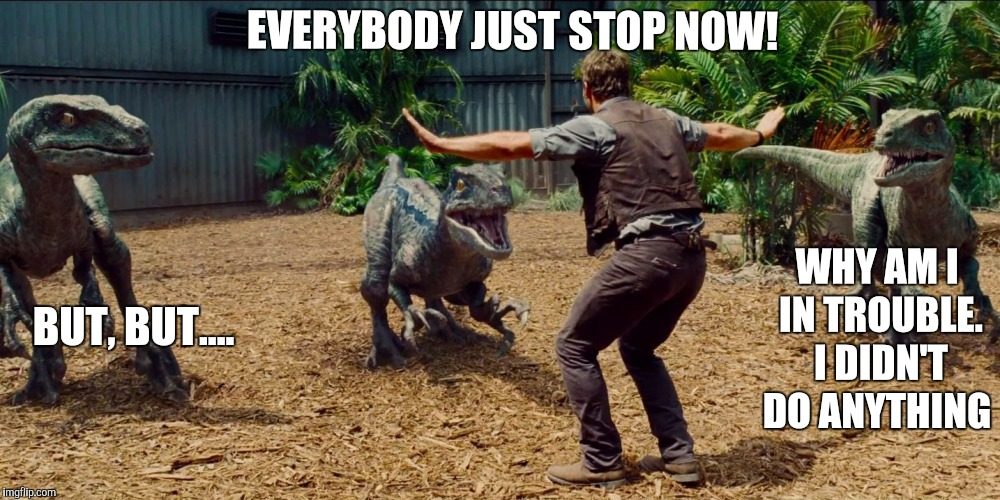 Jurassic park raptor | EVERYBODY JUST STOP NOW! BUT, BUT.... WHY AM I IN TROUBLE. I DIDN'T DO ANYTHING | image tagged in jurassic park raptor | made w/ Imgflip meme maker