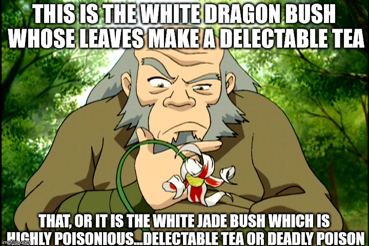Delectable tea or deadly poison | THIS IS THE WHITE DRAGON BUSH WHOSE LEAVES MAKE A DELECTABLE TEA THAT, OR IT IS THE WHITE JADE BUSH WHICH IS HIGHLY POISONIOUS...DELECTABLE  | image tagged in avatar the last airbender | made w/ Imgflip meme maker